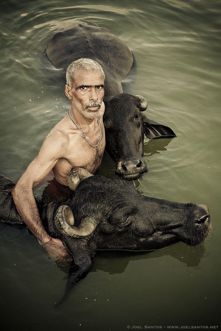 Photograph Embracing Buffalos by Joel Santos