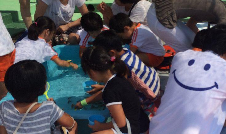 Een school vissen voor vissen op school   Wanneer je vlakbij de kwekerij op kleuterschool zit heb je geluk. Want de zoon van Momotaro geeft zomaar tientallen jongbroed Koi weg aan de kinderen die ze kunnen vangen. Jong geleerd is oud gedaan!   http://www.koiquestion.be/2014/07/23/een-school-vissen-voor-vissen-op-school/