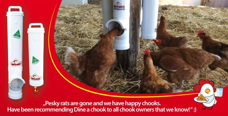 dinea-a-chook-Our patented #rain #cover and gutter system is designed to protect the #feeding bay from the heaviest downpours.  What do you think? Are you interested in?                      We're running a #competition right now and you could win one of our #chickenfeeders. testimonial2.png#chickens feeders #hens #eggs #feeders #homesteading #farmers #drinkers #Townsville #shop #Mealworms #chickens  #PoultryFarming
