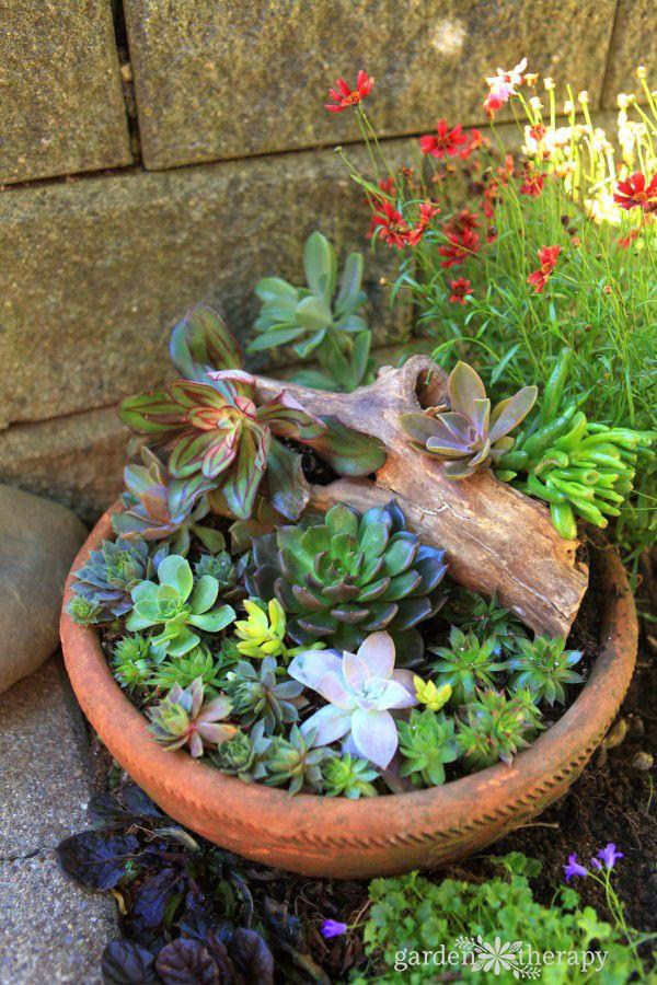 445 best succulent garden art images on pinterest yard for Wooden cactus planter