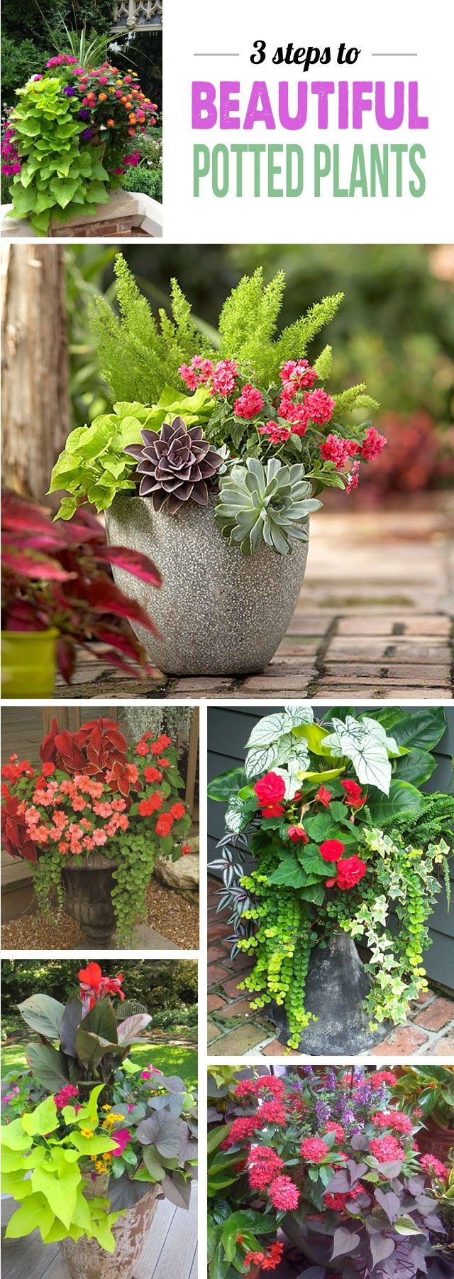 Great tips for making stunning potted plant arrangements!
