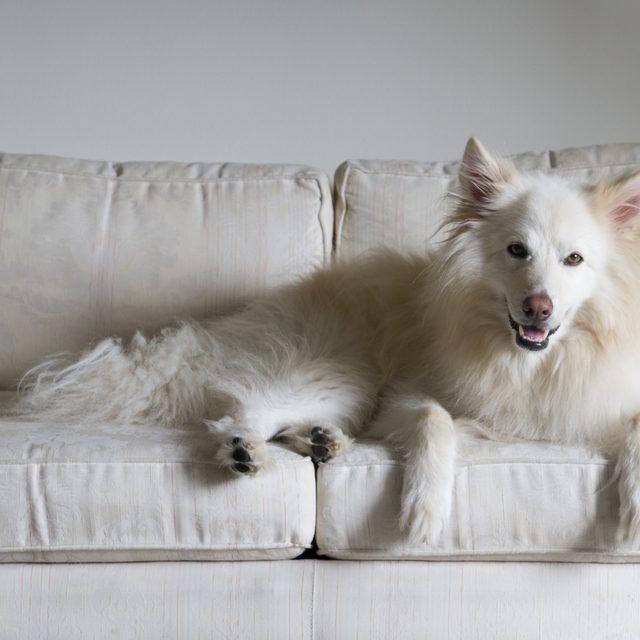 Dogs And Hardwood Floors: Best 25+ Pee Smell Ideas On Pinterest