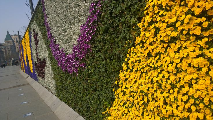 Wall of flowers along the Bund. I walked along there just at dawn one morning, and there were old people whose job it was to pick every flower that had wilted, or any leaf that had dies.