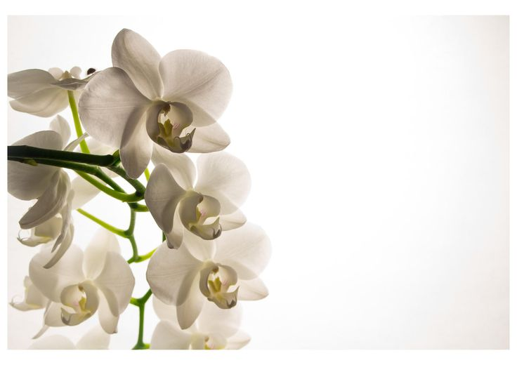 Photograph Orchidee by Martin Lennicke on 500px