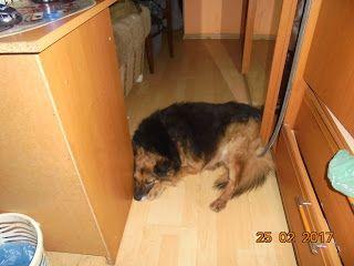 Gawęda jak nasze psy i koty: Ja Pysia wam to mówię (opowieść 8 – nie lubię jeść...