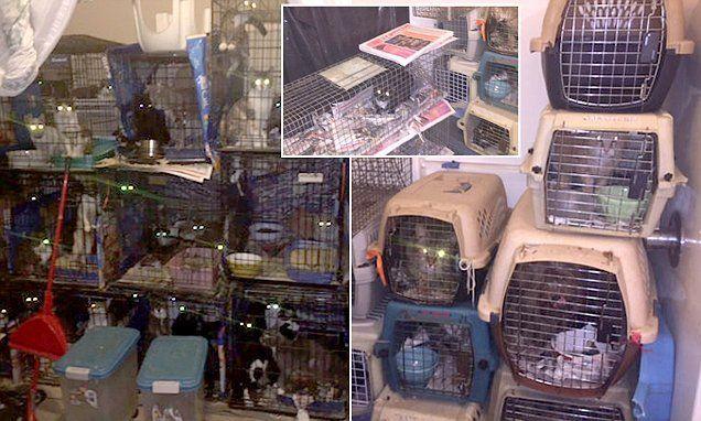 """Εικόνες Φρίκης: Πάνω από 80 υποσιτισμένες γάτες και σκύλοι βρέθηκαν στο """"Σπίτι του Τρόμου"""""""