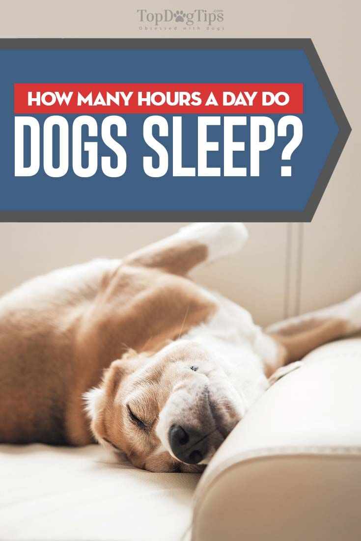 Why And How Much Do Dogs Sleep Sleeping Dogs Sleeping Puppies Dog Science