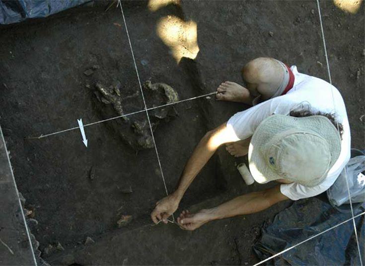 """Mas o que é que eles comiam? Depois de peneirar 300 litros (79,3 galões) de sedimentos escavados, desde 4,5 a 9 pés debaixo de um monte artificial, numa parte funerária do povoamento, os investigadores descobriram uma resposta surpreendente: peixes. Escavações no sítio pré-histórico Hatahara revelaram uma grande diversidade de ossos de peixes. """"... minha surpresa, mamíferos correspondiam apenas a 4 por cento dos restos mortais, enquanto peixes e répteis correspondiam aos restantes 96%."""""""
