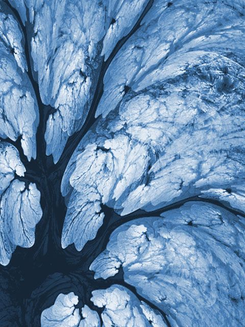 Ice Trees  fractal flame by Cory Ench 1999 ©