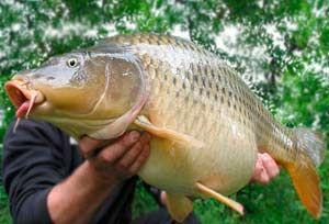 Рыбалка видео: Ловля карпа в сентябре
