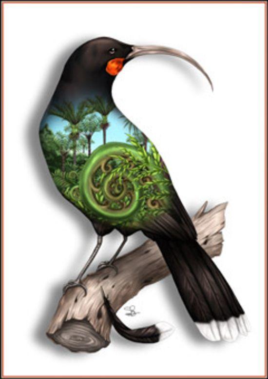 huia bird - Google Search