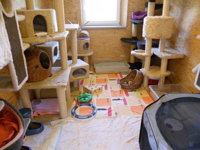 Útulek Tibet o.s. - útulek pro opuštěné psy a kočky
