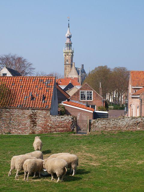 Sheep outside Veere by Wandering Aloud Blog, via Flickr