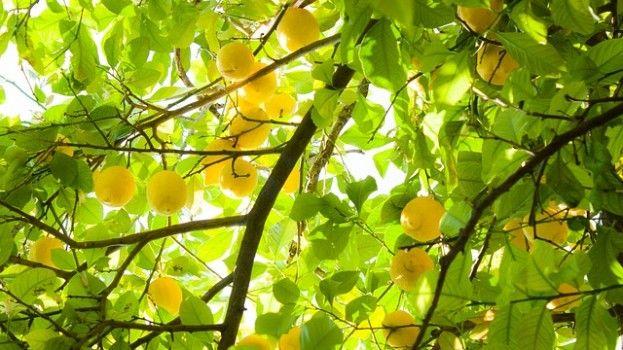 DIY: citronella kaars tegen muggen