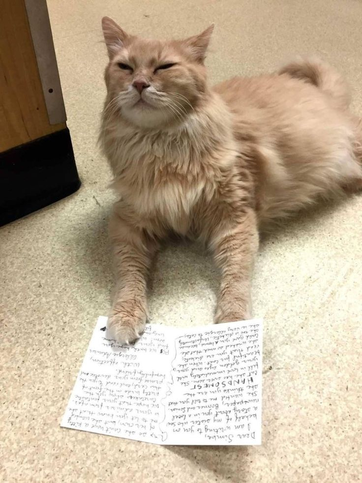 11 Year Old Shelter Cat Simba With Special Needs Receives