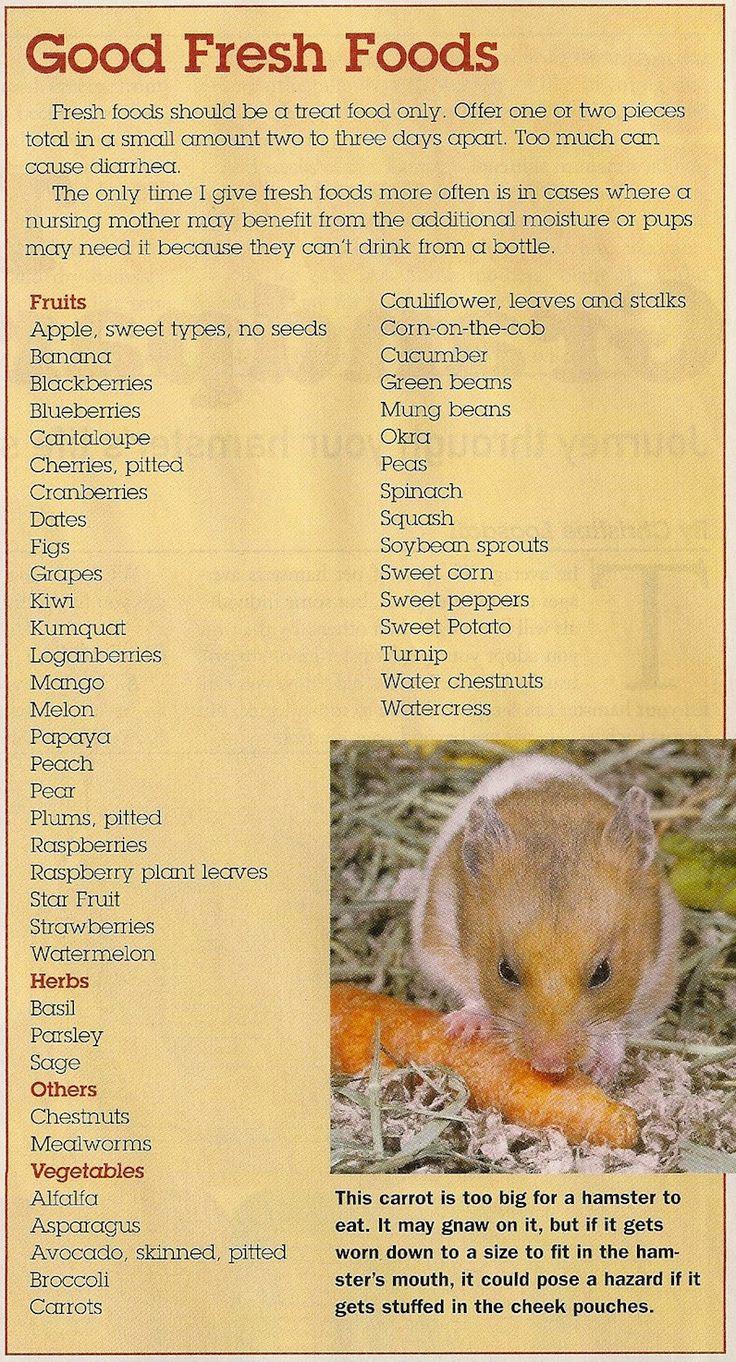 Hamster foods