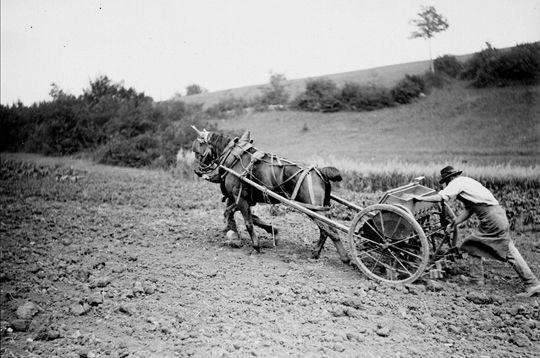 Selon les cultures, le semis est pratiqué de diverses manières. Ici, les paysans ont recours à un semoir à cuillères tracté par un cheval. France, 1914. © Jacques Boyer / Roger-Viollet