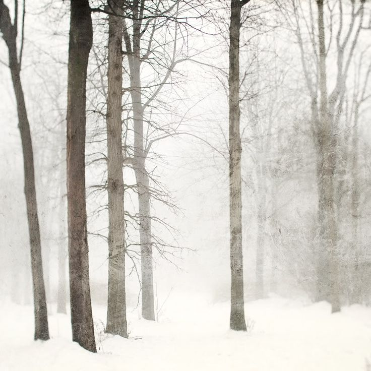snow and trees: Forests, Winter Snow, Snow Photography, Winter Landscape, Winter Trees, Beautiful, Winter Wonderland, White