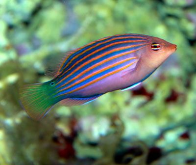 12 best images about aquarium ideas on pinterest keep in for Semi aggressive fish