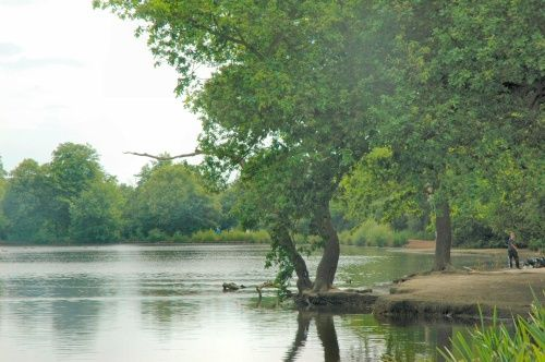 Connaught Waters, Epping Forest, Essex
