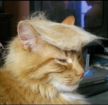 Donald Trump's cat... I'm sorry. I couldn't resist... or stop laughing.
