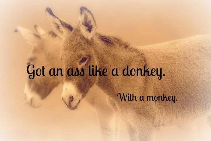 Got an ass like a donkey. With a monkey. | If Pitbull Lyrics Were Motivational Posters