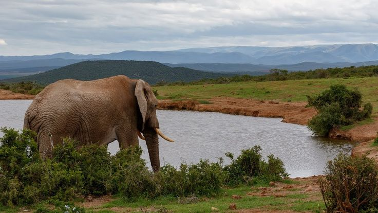 Addo Moments #Photos at The Addo Elephant National Park