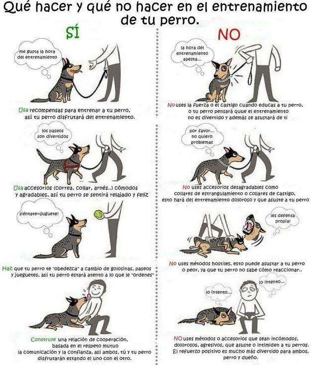 Mientras estás educando a tu perrito, es importantísimo que no uses cosas hostiles como collares de castigo. | 17 Datos gráficos que todo amante de los perros debe conocer
