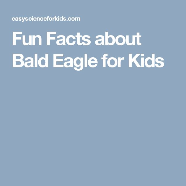 Fun Facts about Bald Eagle for Kids