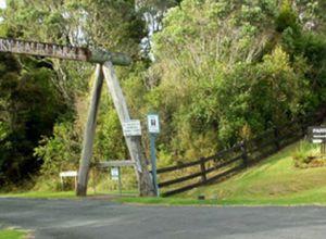 Parry Kauri Park Warkworth