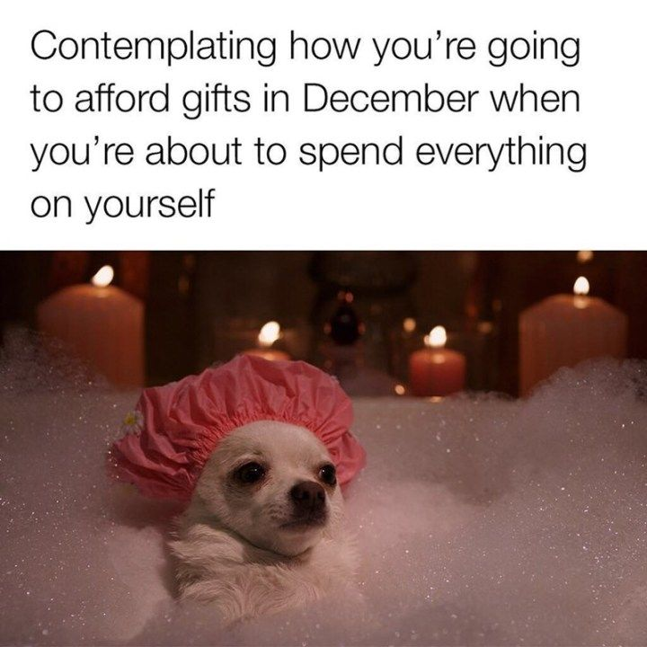 23 Holiday Animal Memes As A Forewarning Of What S To Come And To Bring You Joy Obviously Cutesypooh Christmas Memes Funny Pictures Animal Memes