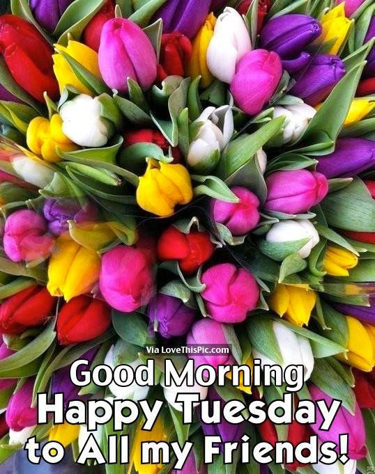 227972-Good-Morning-Happy-Tuesday-To-All-My-Friends.jpg (538×681)