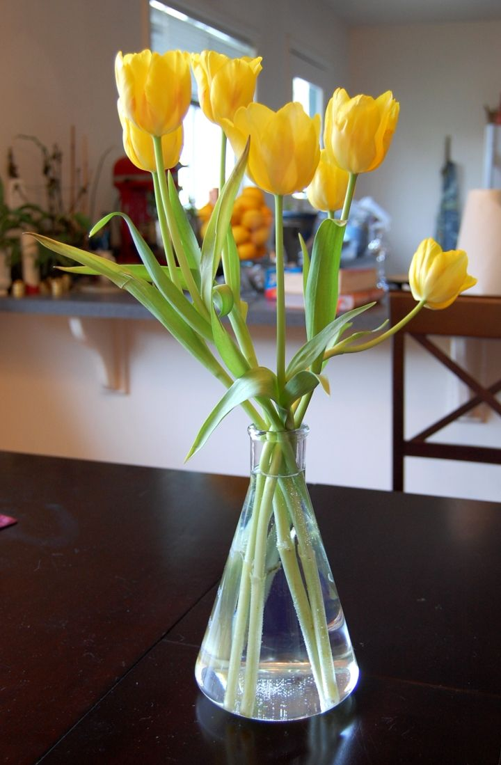 Erlenmeyer Flask As Vase - combining my passion for science and flowers? Yes, most definitely.
