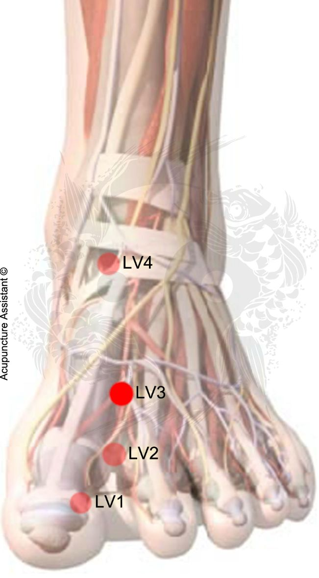 LIVER 3: GENERAL TREATMENT  Point Localization: On the dorsum of the foot in a depression distal to the junctions of the 1st and 2nd metatarsal bones. TCM Actions: Controls Liver Yang. Extinguishes Inner Wind. Smooths the flow of Liver Qi. Resolves Dampness. Invigorates Xue. Regulates menstruation. Calms the Mind (Shen). Resolves spasms. Indications: Headache. Dizziness. Blurred vision. Numbness of …