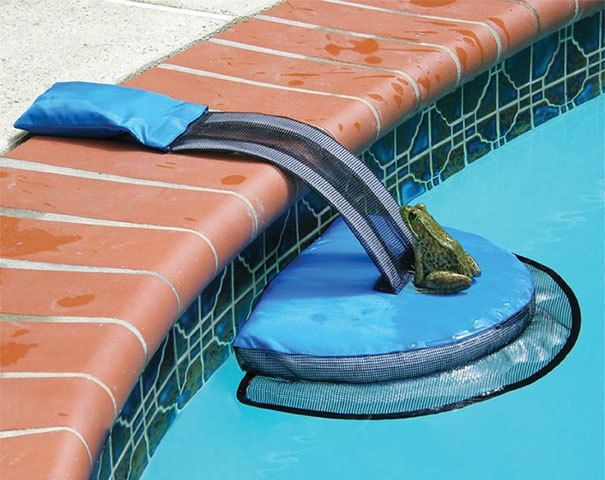 The Frog-Log Saves Wildlife From Drowning In Swimming Pools. - http://www.lifebuzz.com/frog-log/