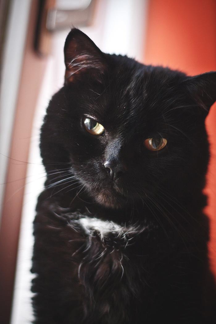Black cat (Nancy Zhang)