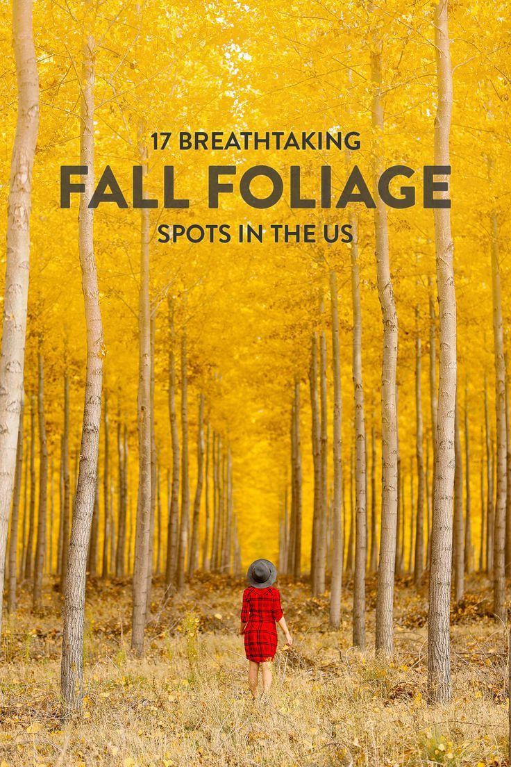 17 Stunning Road Trip Destinations For The Best Fall Foliage In The Usa Fall Travel Road Trip Destinations Usa Travel Destinations
