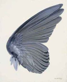 This Painting Of A Birds Wing Was Created By Albrecht Durer I