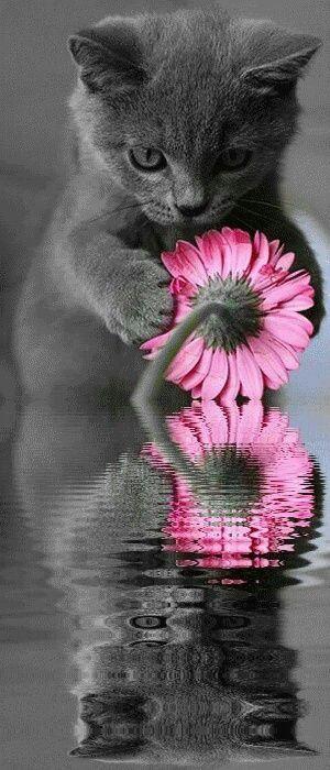 Pink flower with cute kitten.You Sweet My Beautiful Kitten....<3