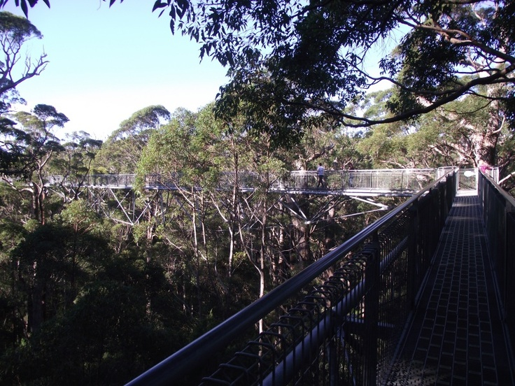 View from the Tree Top Walk - Valley of the Giants, South West WA, Denmark.