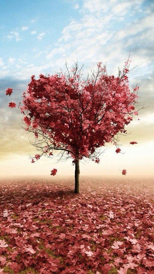 """"""" Las ilusiones perdidas son hojas, desprendidas del árbol del Corazón... """"   José de Espronceda ( Poeta Español)"""