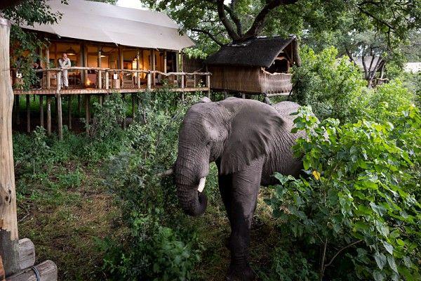Tubu Tree Camp, Okavango Delta #Botswana #Africa #safari
