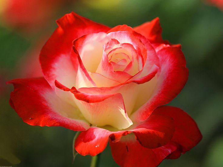 Vibrant Beauty. [Desktop wallpaper 1024x768] | Plants ...