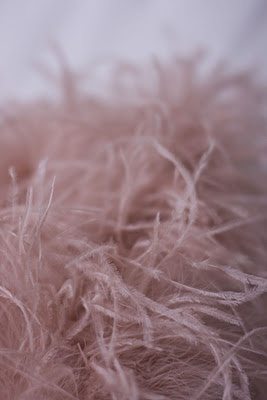 Pale pink ostrich feathers