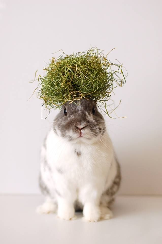 Bunny with a nest of grass resting on his head.
