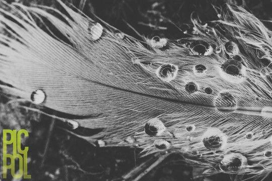 Pluma con gotas de rocío
