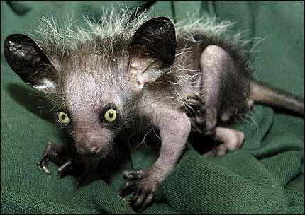 Самые странные и необычные животные со всего мира (20 фото).