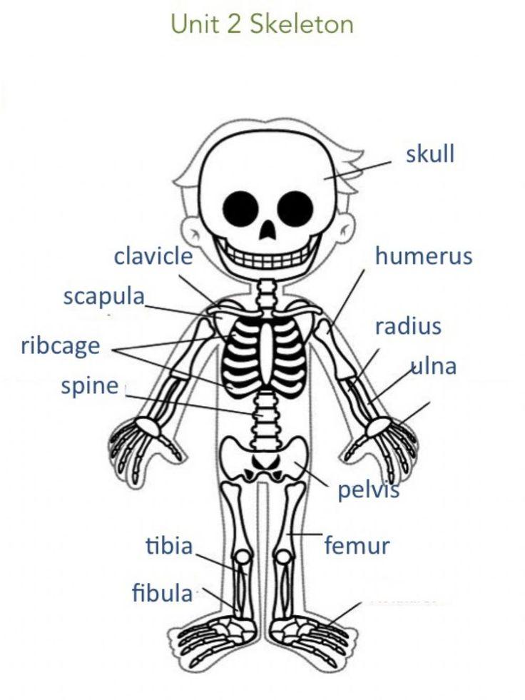Unit 2 Skeleton Information - Interactive worksheet ...