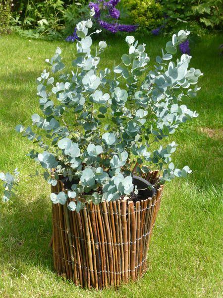 Les 25 meilleures id es concernant arbuste ornemental sur for Recherche entretien jardin