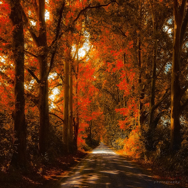 I love trees in fall colors.: Hungary, Fall Colors, Autumn, Beautiful, Road, Places